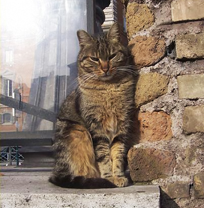Cat_By_Brick_Wall